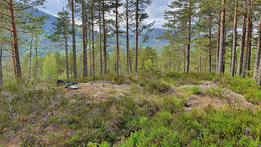 Toppunktet på Storøya (254).
