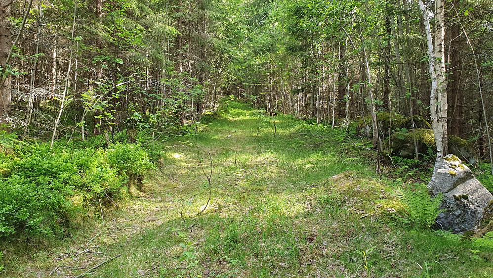 Trivelig og lettgått traktorvei i starten etter at jeg forlot skogsbilveien.