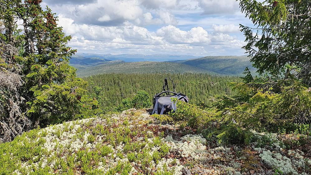 På toppen av Gymleåsen (959). Utsikt østover.