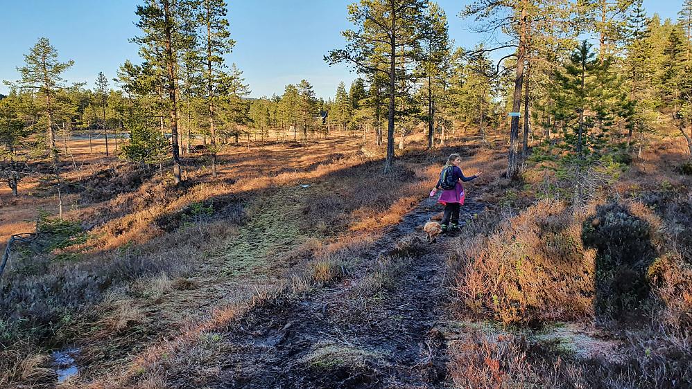 Frida og Luna i stikrysset hvor vi tok til høyre. I bakgrunnen til venstre skimtes Øvre Tretjenn mellom trærne.