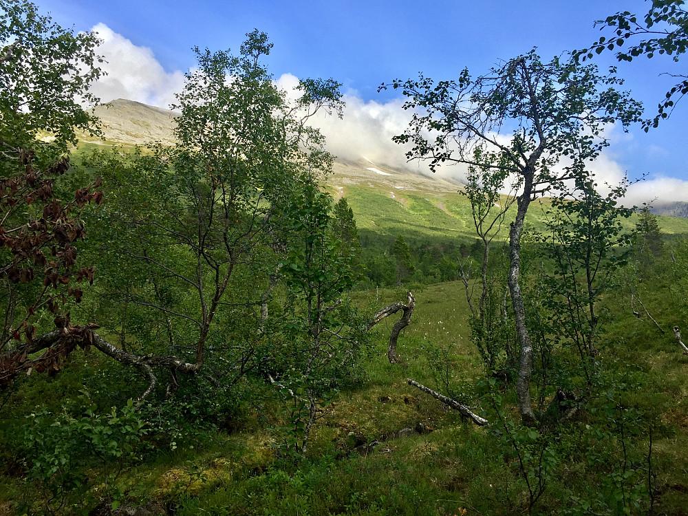 Skodda ligger fortsatt rundt toppen, men kan tydelig se ruta mi, fulgte snøfeltene og videre en bekk nedover som førte meg via mye interessant vegetasjon etter hvert ned til brua og stien
