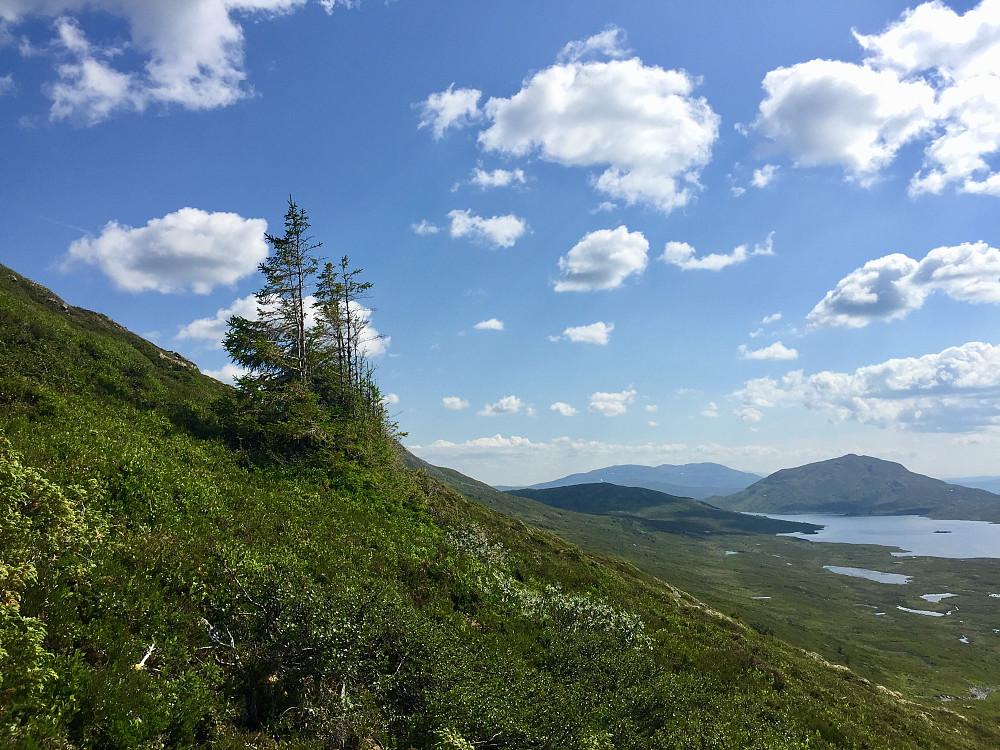 Noen få grantrær hadde fått seg feste her oppe i det lite vegeterte landskapet