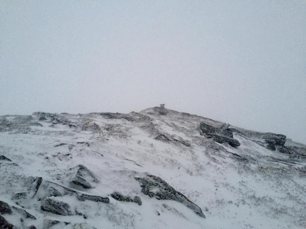 Austlige Lotsbergnibba
