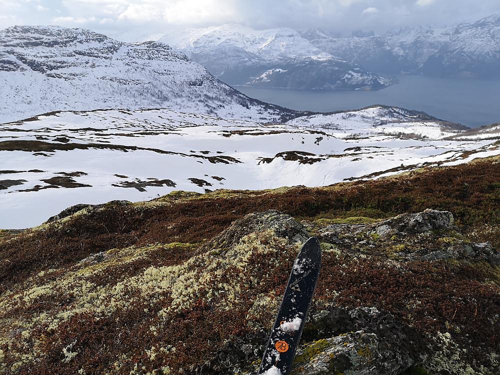Vårlig følelse i februar med mose og lyng under skia !