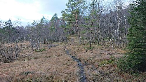 Trail from Gjerstadstølen