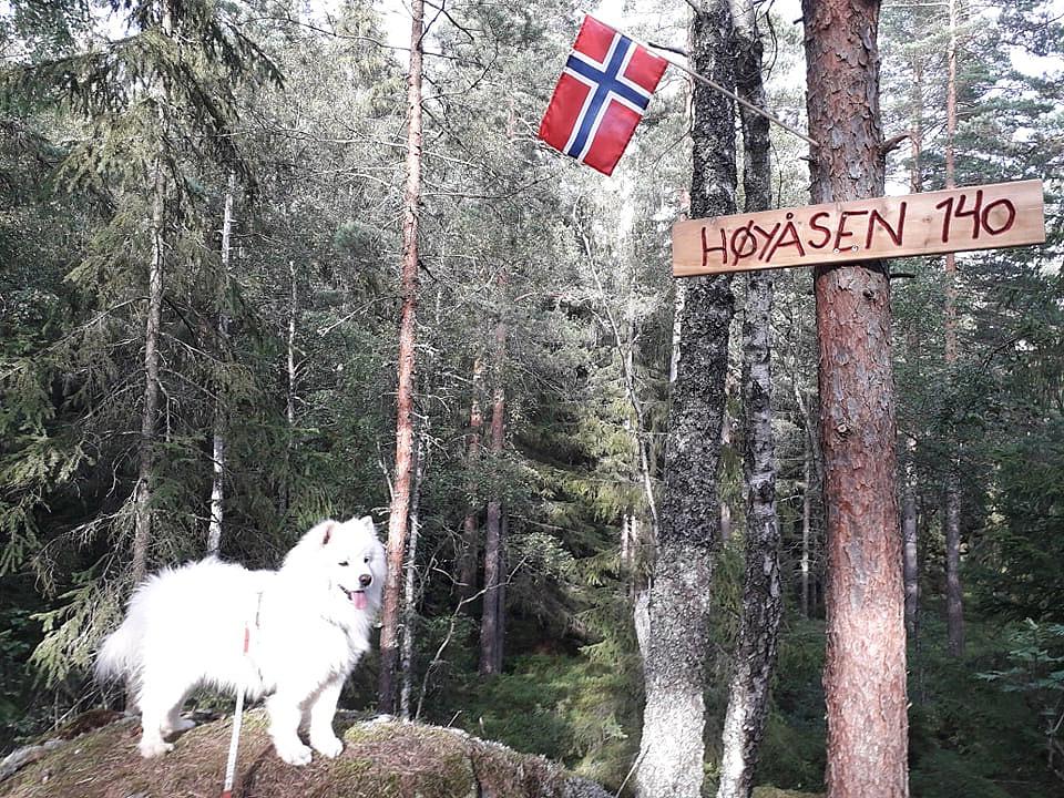 Anjing på Høyåsen