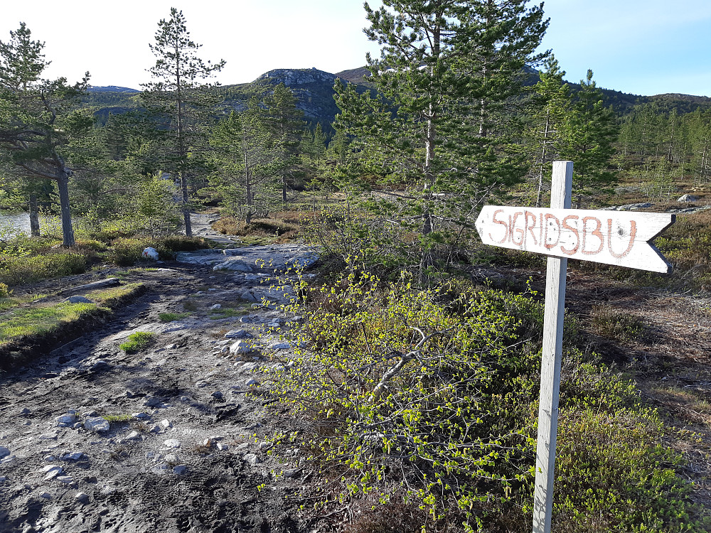 Fra Nordstul parkering (Blefjell parkering) er det lett å finne veien mot Sigridsbu.