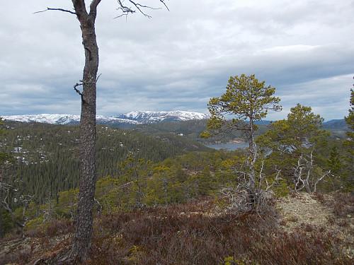 Toppen av Fuglleikhaugan med utsikt mot Hemnafjell