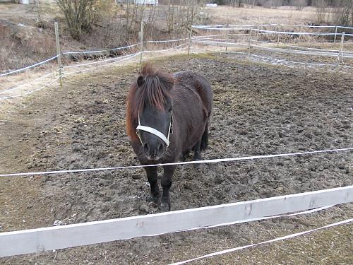 Hest ved starten på Flakk