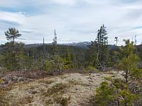 Toppen av Høgloftet