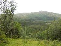 Grensen øst for Steinfjellet