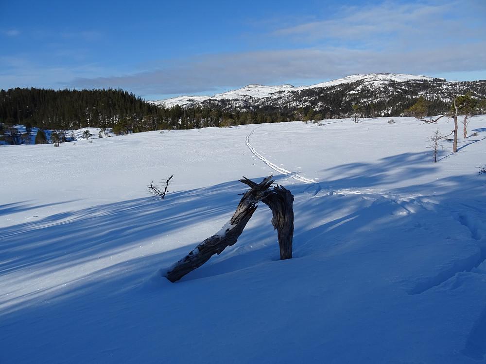 Flott skiterreng ved Klokkatiklumpen