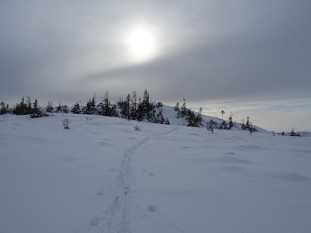 Høyeste punkt (401 moh) på Våttåheia