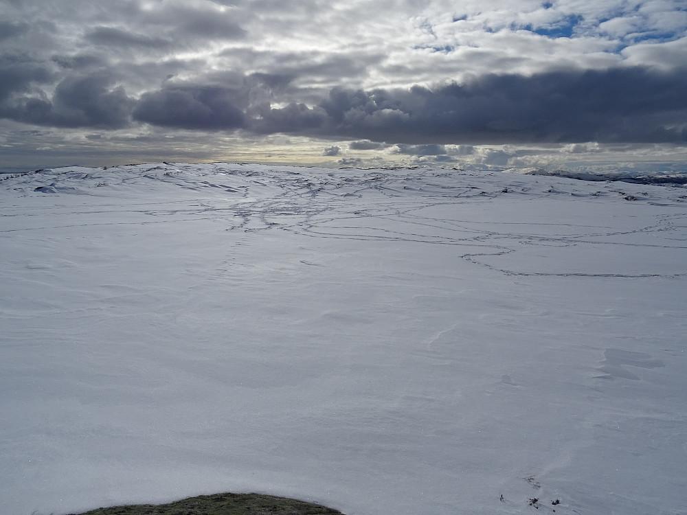 Lite tjern noen meter sør for Groftdalsheia med mange reinspor