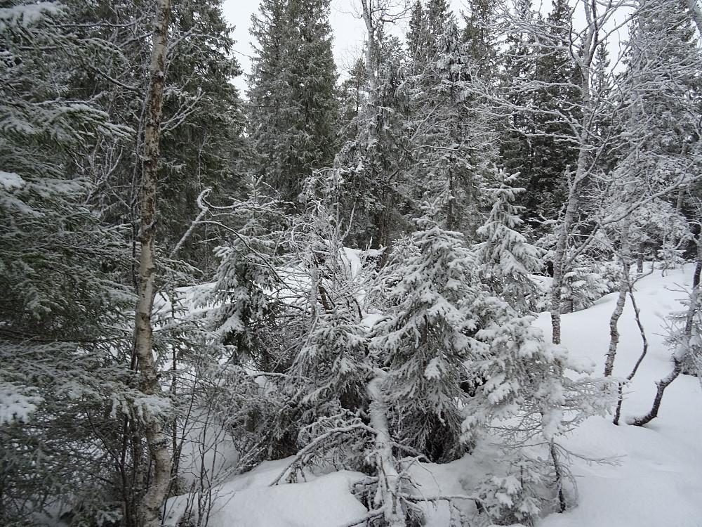 Skogsutsikt fra toppen av Bergsåsen