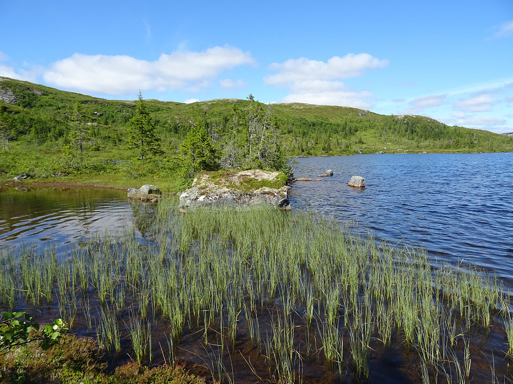 Ei fin halvøy i Øver-Kallhammarvatnet