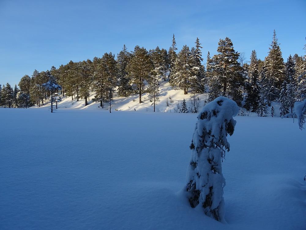 Nabotoppen på 380 meter. Skardsberget bak