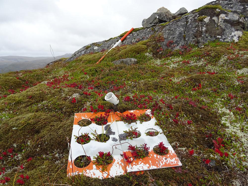Trigpunktplaten på Kalvstrandklumpen fungerer som blomsterpotter. (ikke høyeste punkt)