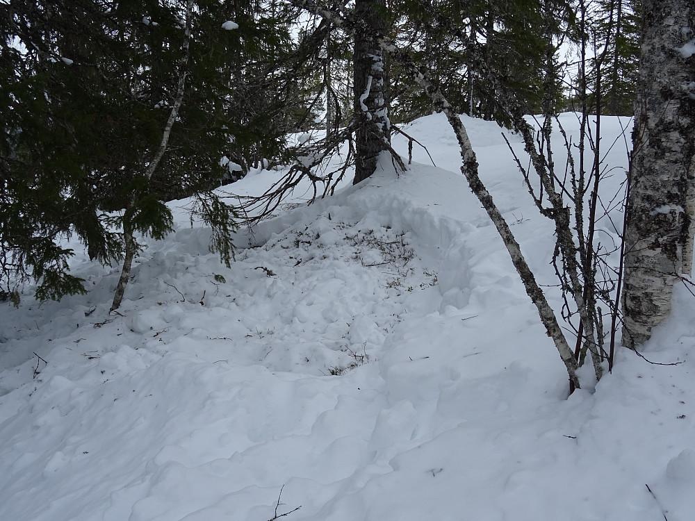 Her har elgen slappet av i snøen
