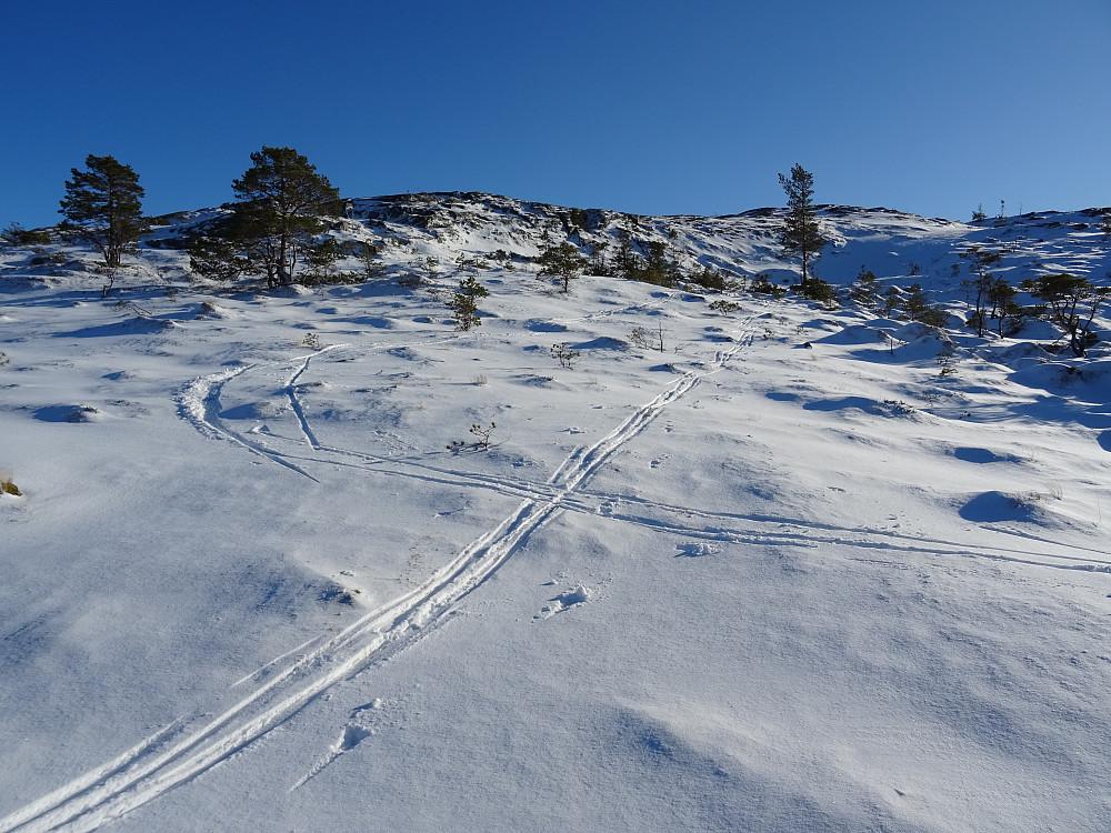 Flott skiterreng på ryggen mot Meraftahaugen