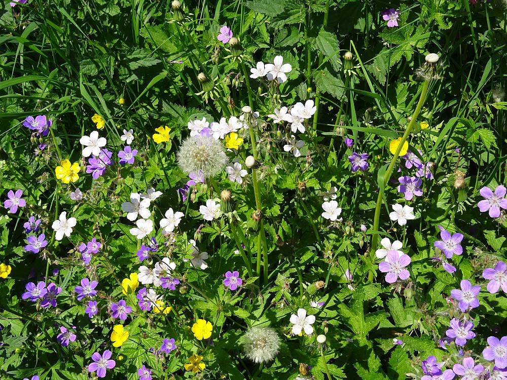 Et hav av blomster i Forradalsvegen