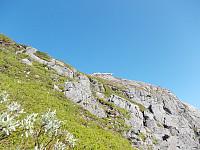 Sauene nyter fjellivet