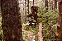 Et troll vokter stien til Gardafjell.